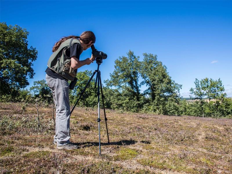 birdwatching2
